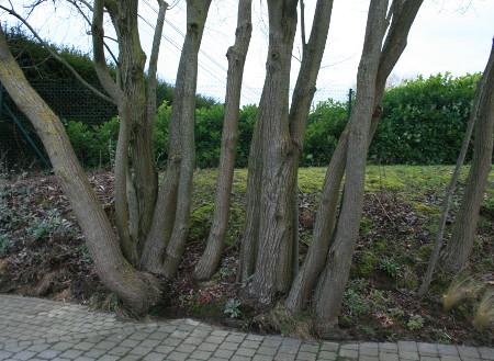 """arbres à l'entrée à """"colorer"""""""